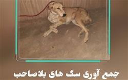 یمانکار جدید جمع آوری سگ های بلاصاحب شروع به کار کرد